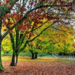 fall_autumn_trees1